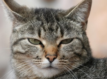"""Curiosità, donna abbandona il gatto """"è gay"""""""