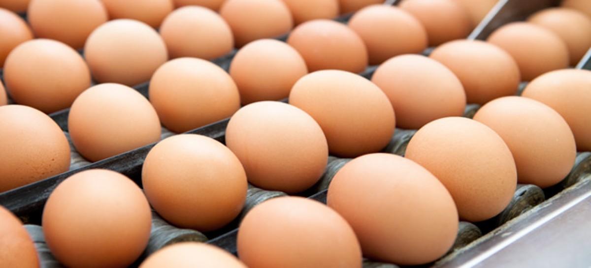 Foggia, sequestrate 40 mila uova che presentavano una scadenza posticipata