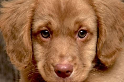 San Severo, centinaia di cani verranno liberati per le vie cittadine
