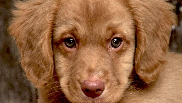San Severo, centinaia di cani verranno liberati per le vie ...