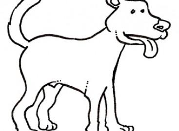 Orsara di Puglia, ritrovati cinque cani senza vita: caccia ai killer
