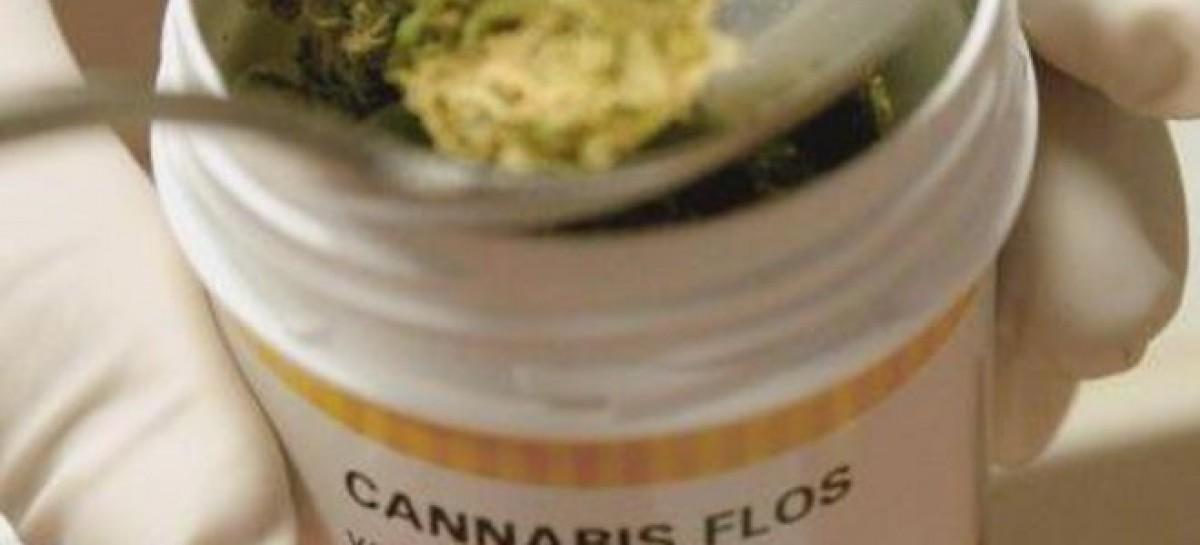 La Puglia dice SI alla Cannabis per uso Terapeutico, al via senza autorizzazione