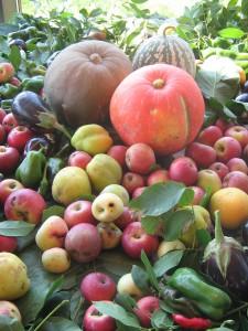Orsara frutta