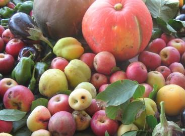 A Orsara il giardino delle coltivazioni rare e preziose