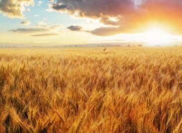 Un Tg sull'agricoltura, nel segno di Provincia Cia Foggia