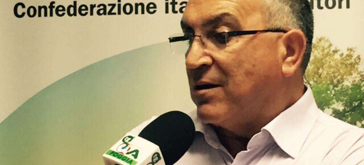 """Cia Foggia, Ferrandino: """"Le industrie schiacciano i produttori di pomodoro"""""""