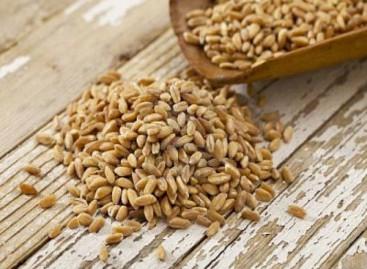 Economia Foggiana, il grano in primo piano
