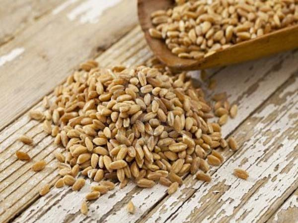 """Prezzi pazzi per il grano da seme, Agrinsieme: """"Vigileremo"""""""