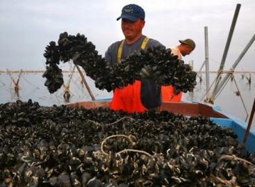Cagnano Varano, biotossina nelle cozze di Capojale: ASL vieta pesca e vendita