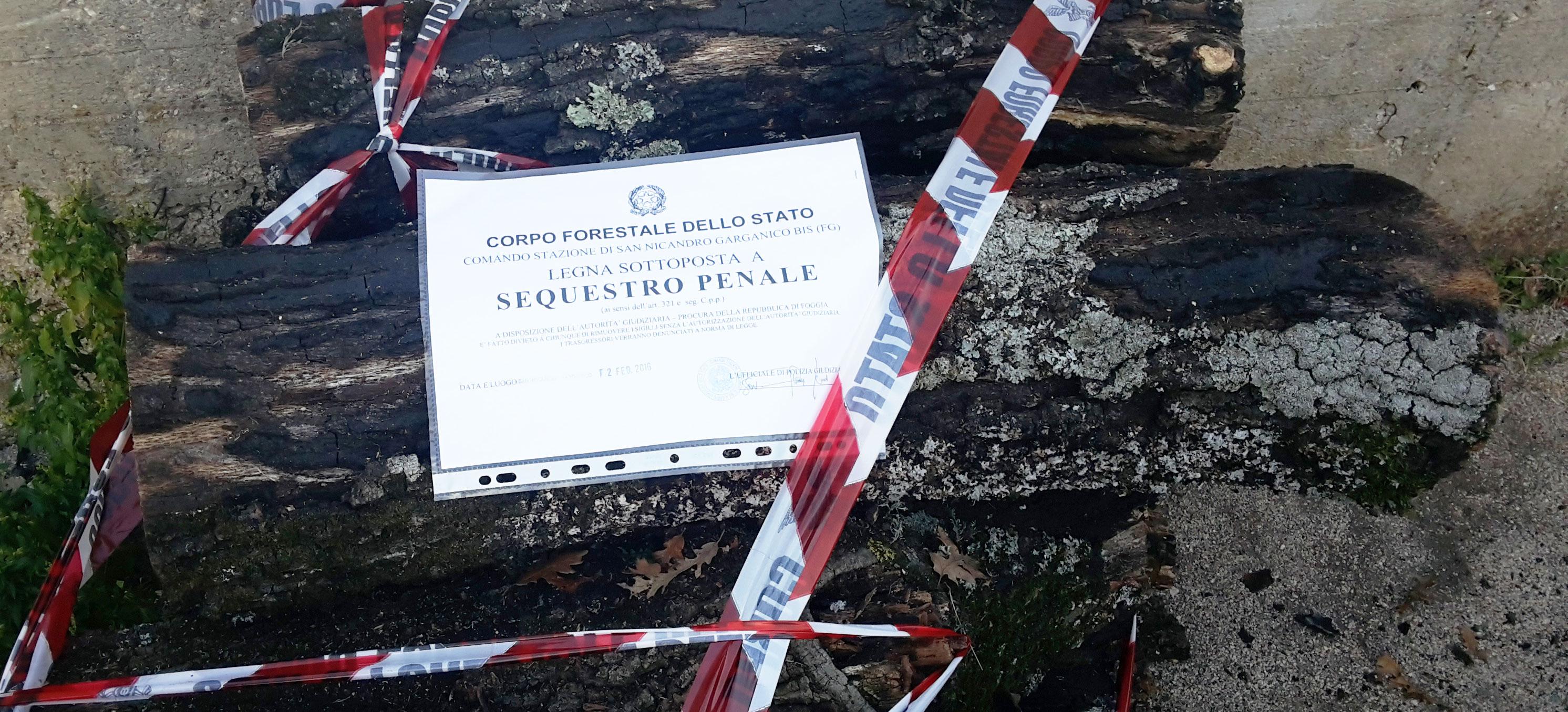 San Nicandro Garganico, Ambiente: Tagli abusivi nel Parco del Gargano