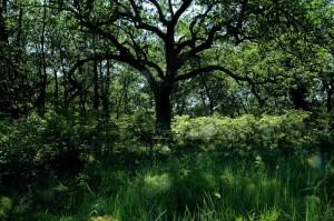 bosco incoronata