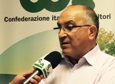 """Agricoltura, Ferrandino (Cia): """"Governo rimandato a settembre"""""""
