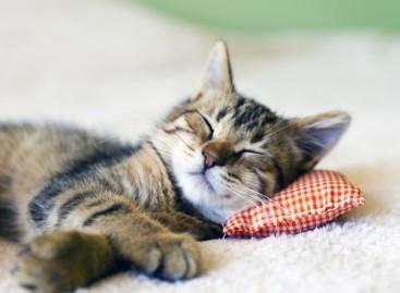Salvatore Panza: Le 10 regole per dormire bene