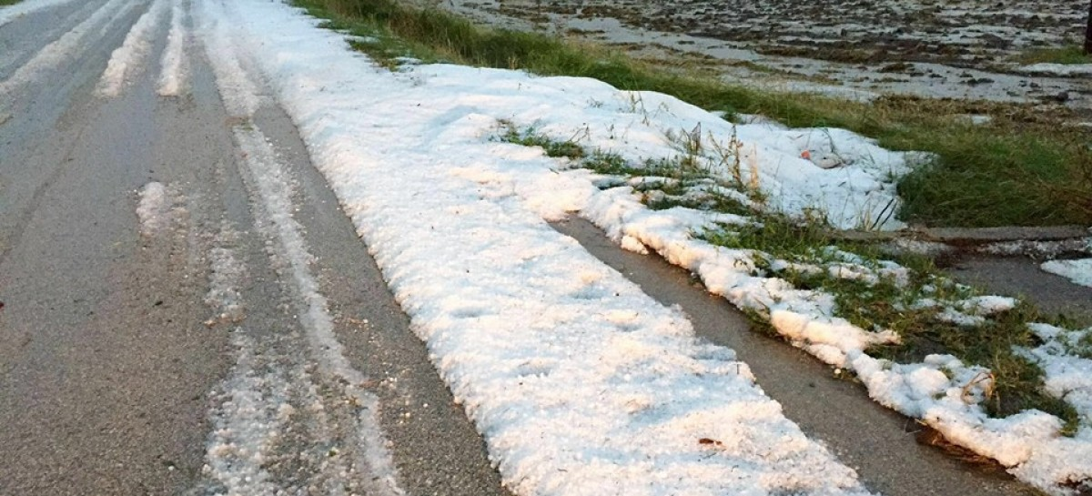 """Maltempo, aziende agricole in ginocchio, Cia Puglia: """"Agire subito"""""""
