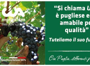 Ulivo, Spiga, Uva e Pomodoro testimonial dell'Agricoltura Italiana 100%