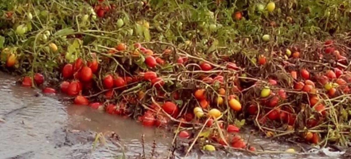 """Pioggia, agricoltura in ginocchio, Cia Puglia: """"Subito la conta dei danni"""""""
