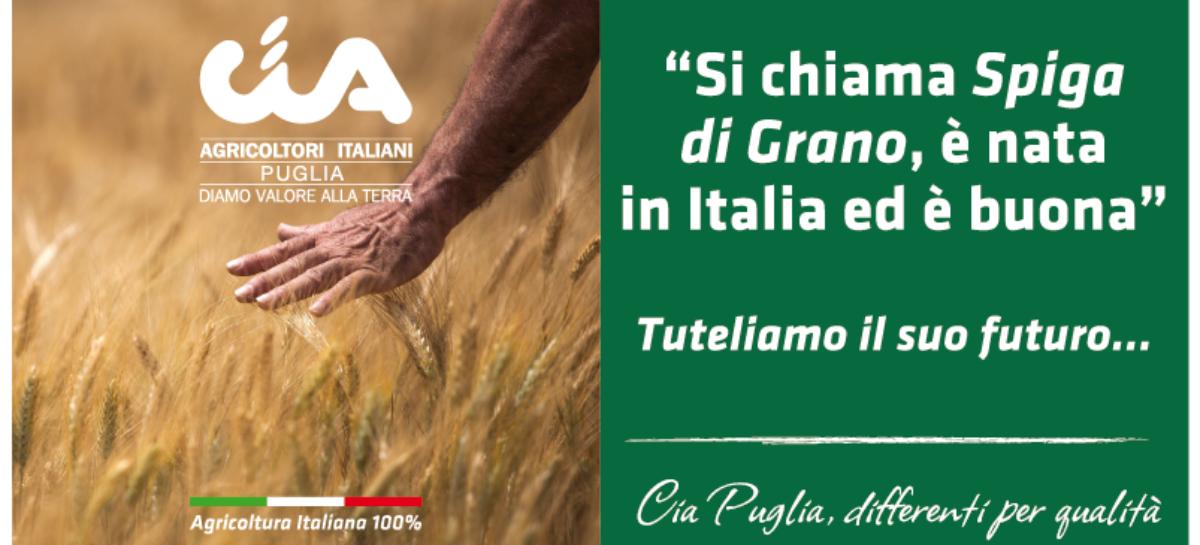 """Cia Puglia: """"Orgoglio contadino e aggregazione per spingere l'export"""""""