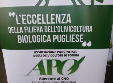 Olio Bio in tour, cresce in Capitanata la qualità certificata