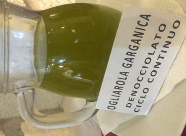 Olio Bio Tour sul Gargano con l'Ogliarola elisir di giovinezza
