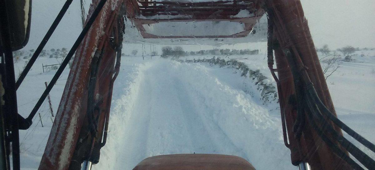 """Bestiame sotto la neve, CIA Puglia: """"Urgente smaltimento delle carcasse"""""""