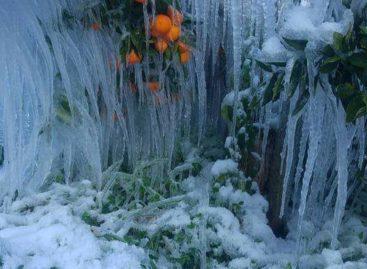"""Emergenza neve, CIA Puglia: """"Subito sgravi fiscali e fondi straordinari"""""""