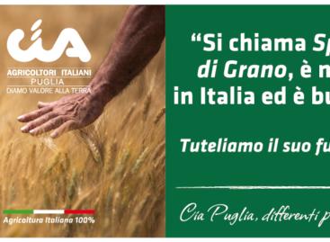 """Grano, Cia: tutela prodotto """"made in Italy"""" e interessi agricoltori è nostra prerogativa"""
