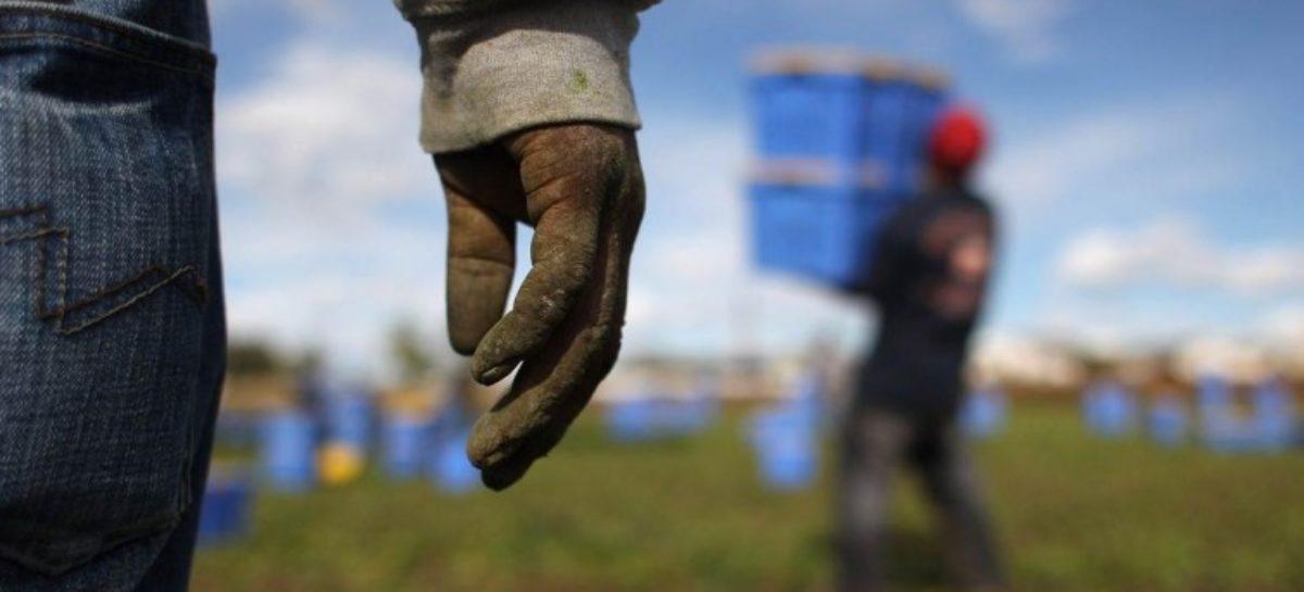 """Sfruttamento del lavoro a Foggia, caso """"capolarato"""""""