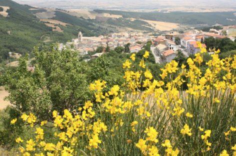 """""""Cantiere Alberona"""": opere per 15milioni di euro"""