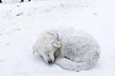 """Gelo in Puglia, tanti animali morti. La CIA: """"Indennità per le imprese"""""""