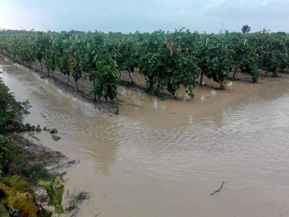 Maltempo, si contano i danni all'agricoltura